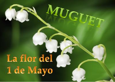 La flor del 1 de Mayo